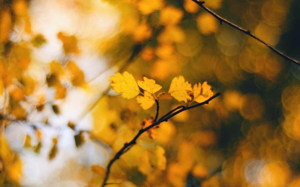 Motiviert und gut informiert in den Herbst